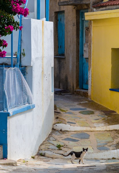 Ben Asen Personal Work Photo: color photo of a cat walking across a path on the island of Skopelos, Greece
