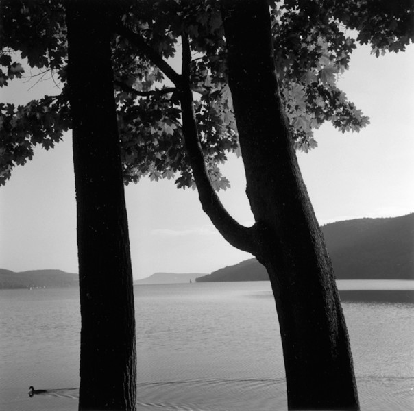 Ben Asen Personal Work Photo: Black and white photo of Ostego Lake in Cooperstown, New York with a duck swimming by 2 trees with hills in the background.
